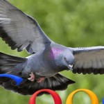 GooglePigeonCompressed-crop