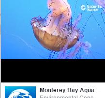 crop-fb-live-aquariums-crop