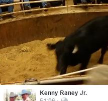crop-fb-live-cattle-auctions